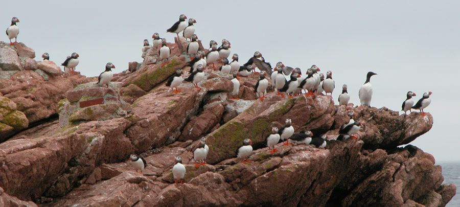 01.09.2019 Puffin Colony2.jpg