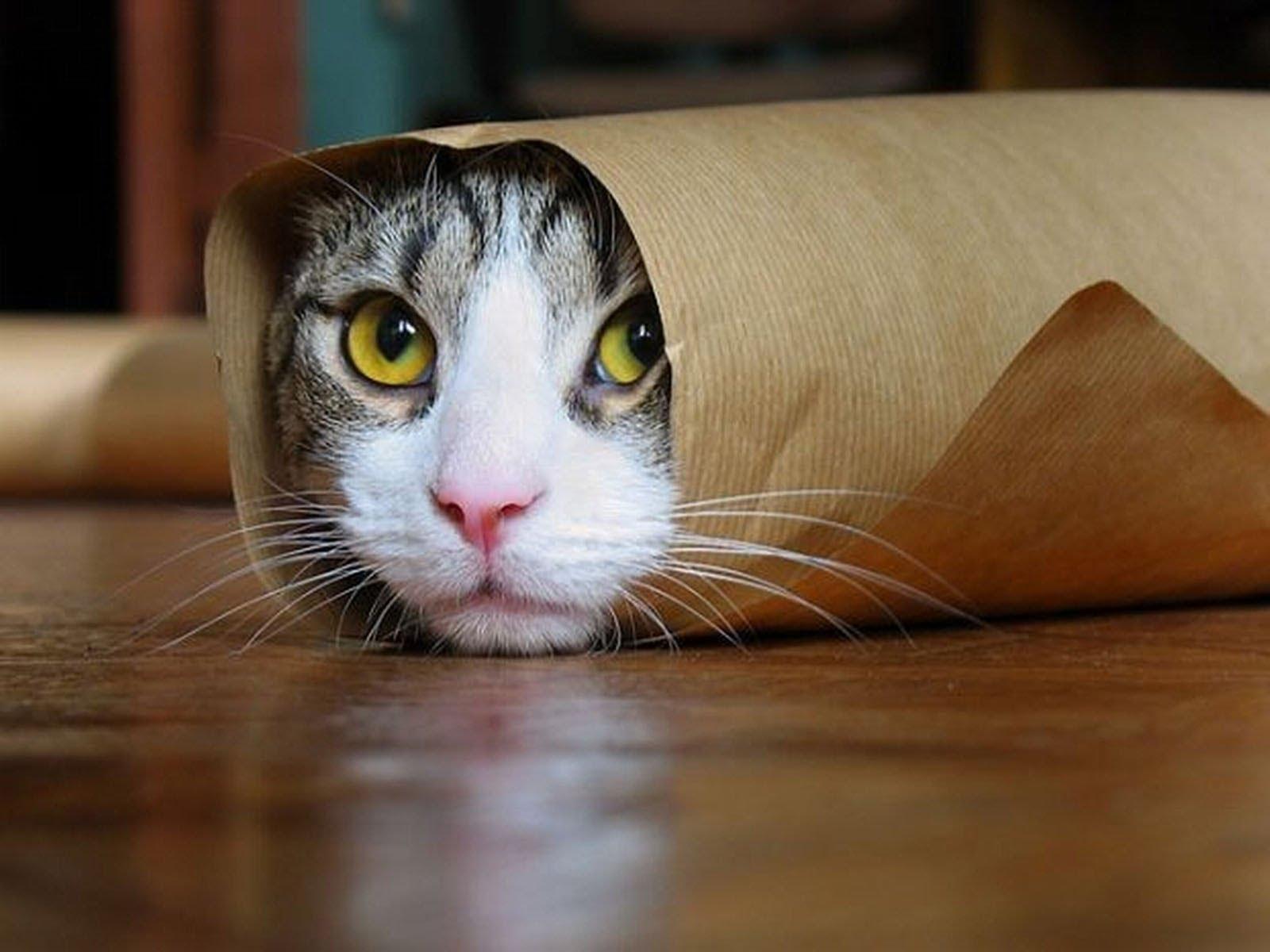 013-that-s-one-greedy-kitty-2554895.jpg