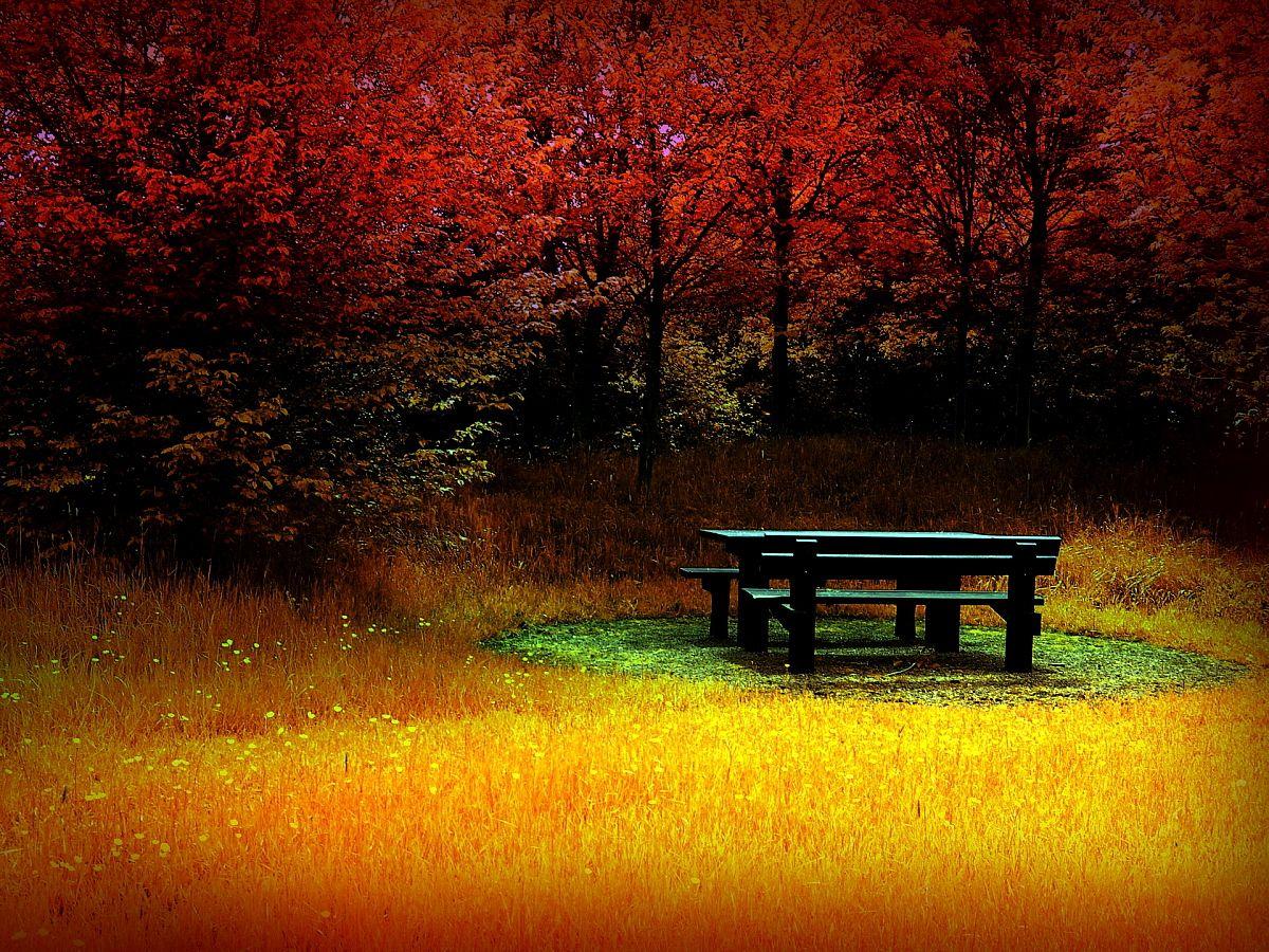 Autumn-HD-wallpaper.jpg