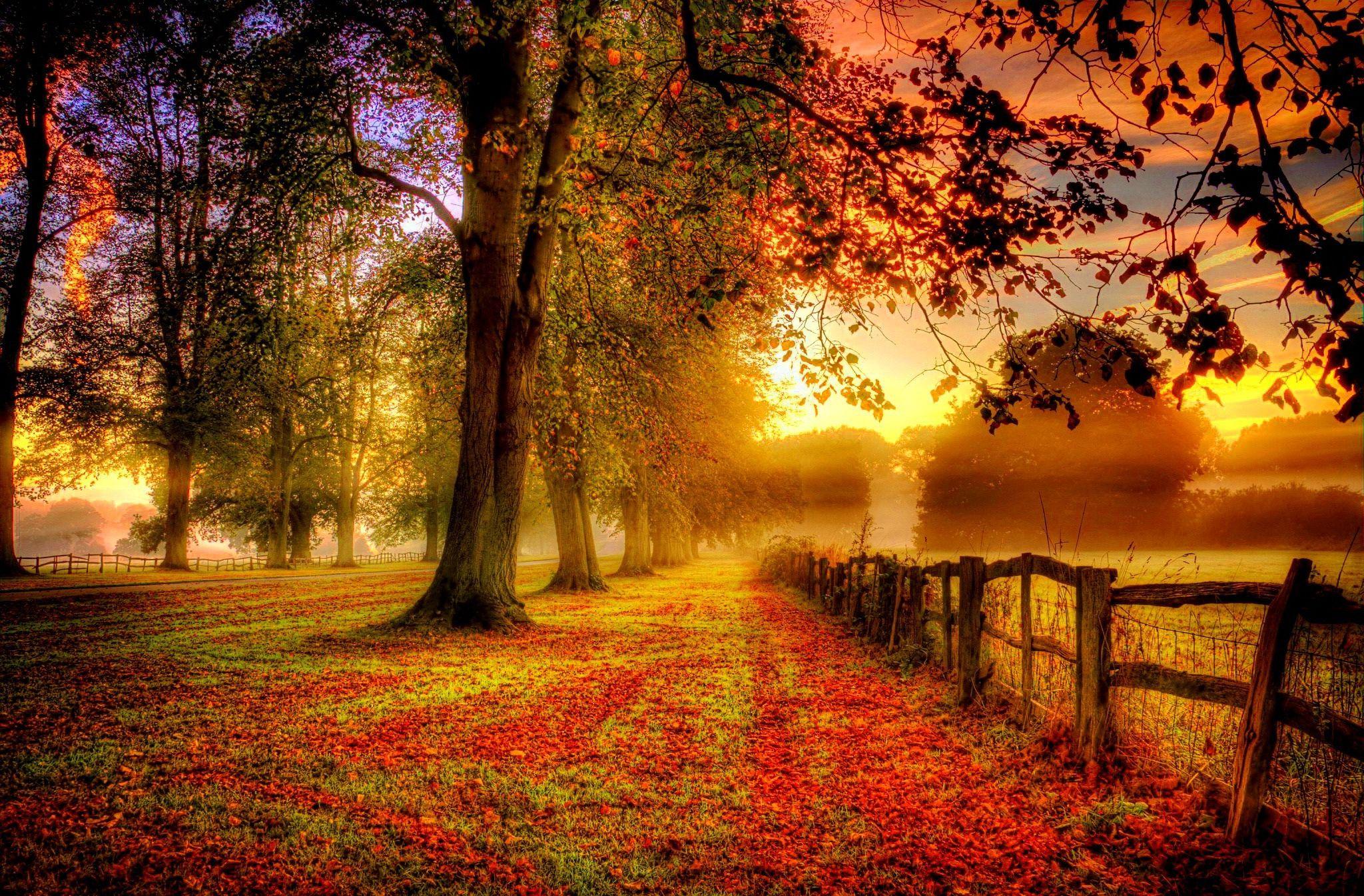 autumn-nature-landscape.jpg