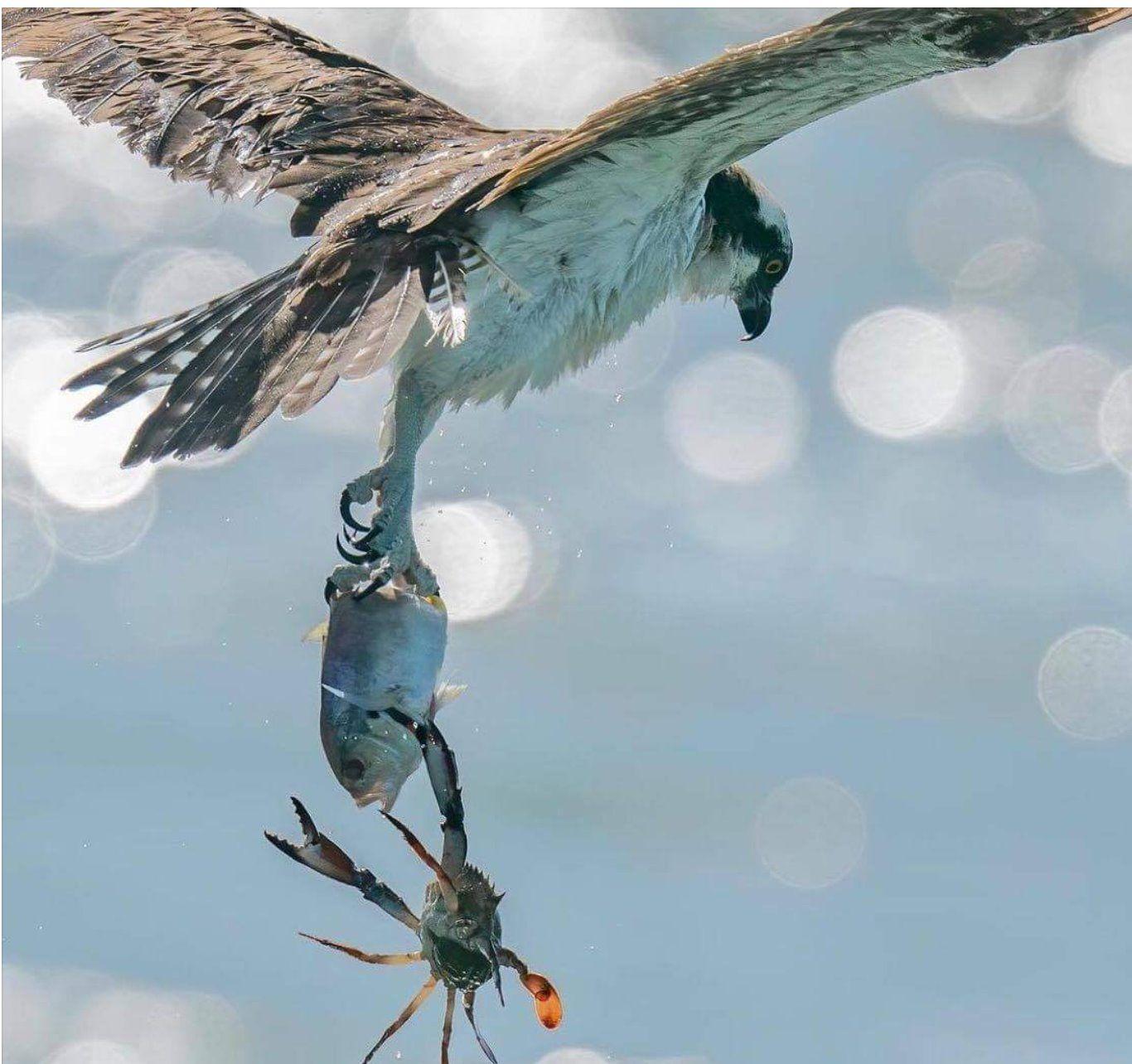 birdfishcrab.jpg