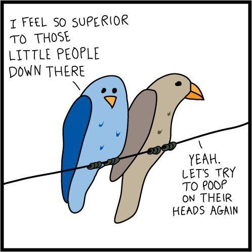 birdstuff.jpg