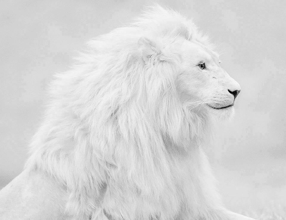 blanc2.jpg