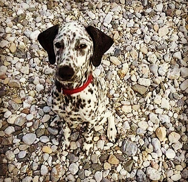 camo-dogs-zoe-x-620-600x.jpg