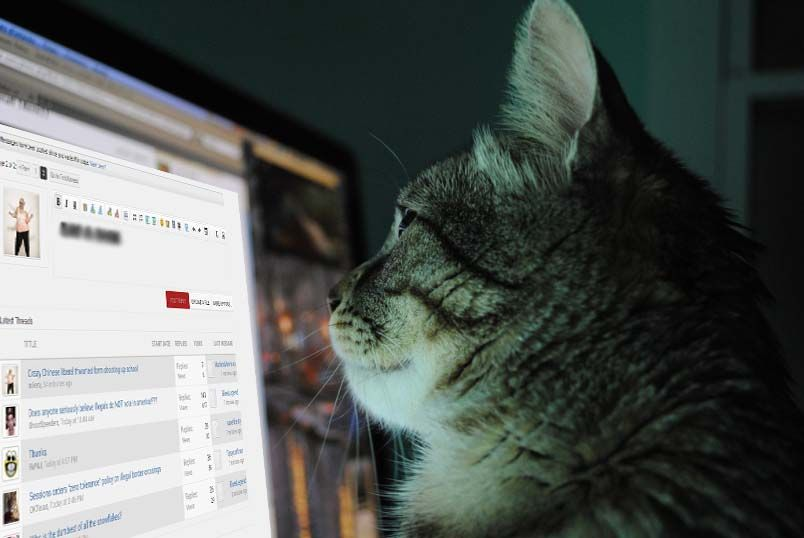 cat-and-computer2.jpg