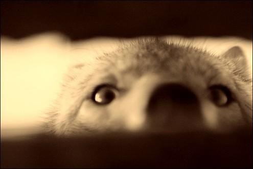 coyote nose.jpg