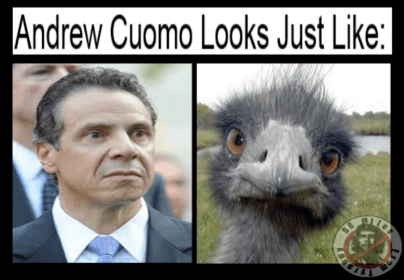 cuomo.png