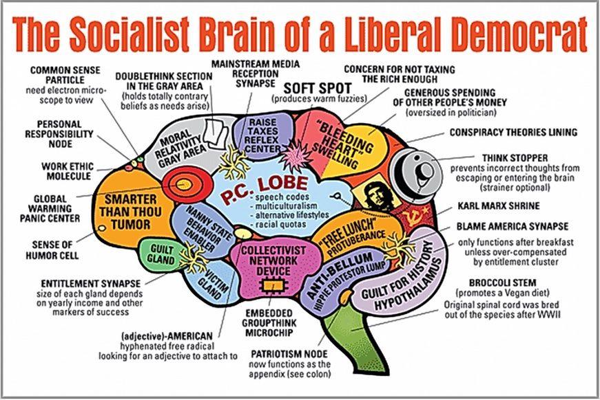 dumbsjwdemocrat-brain.jpg