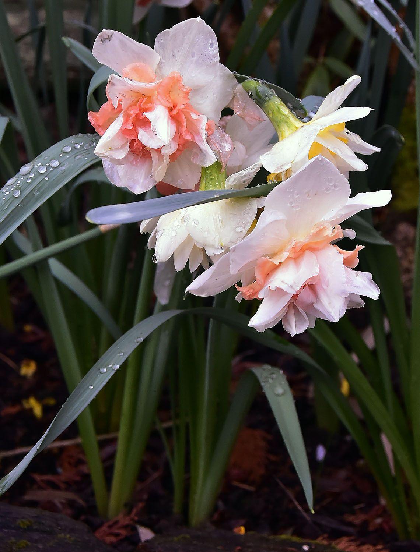 Flower#208.jpg