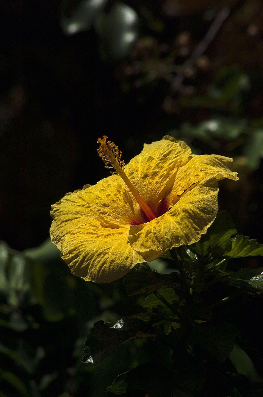 Flower#72.jpg