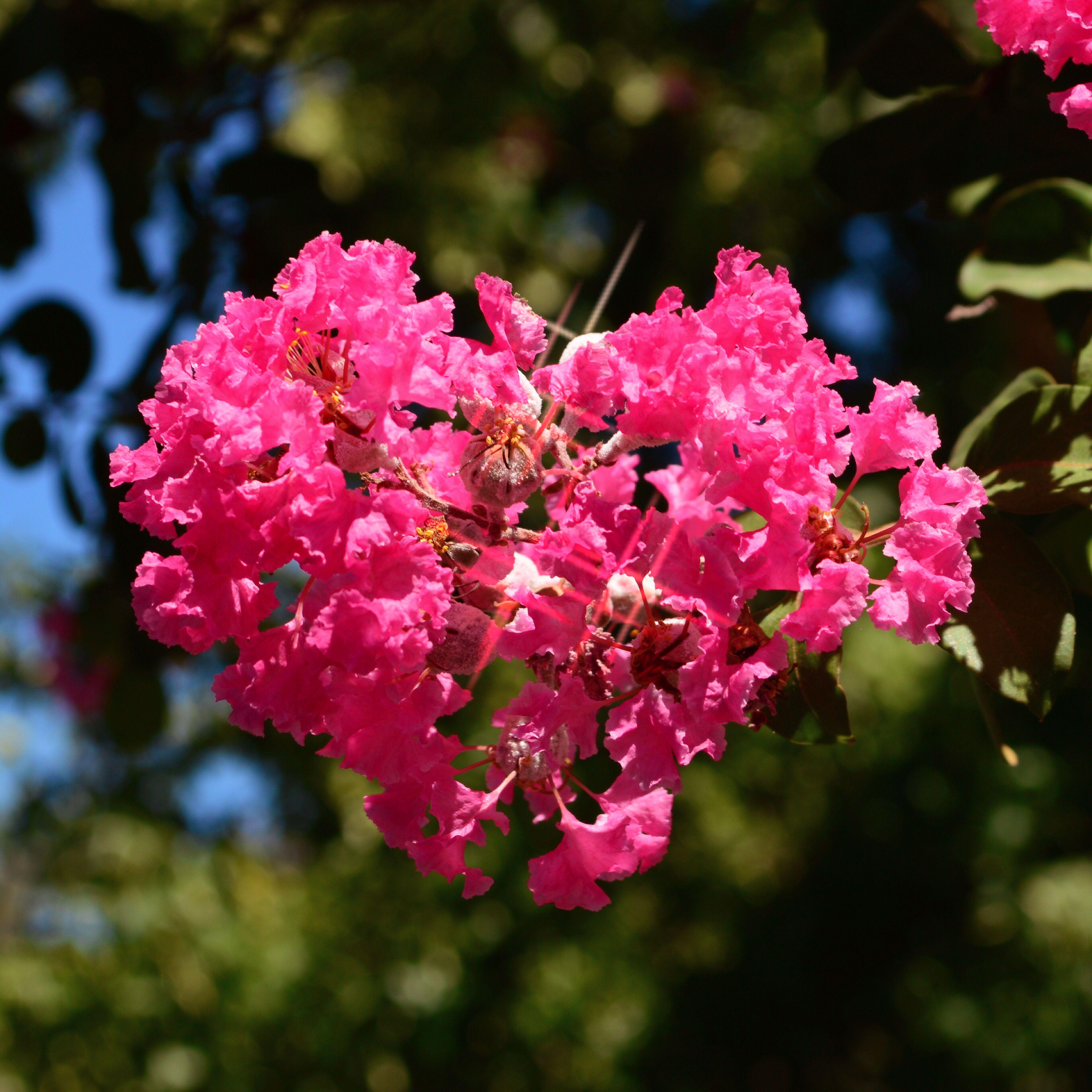 FlowersHeart.JPG