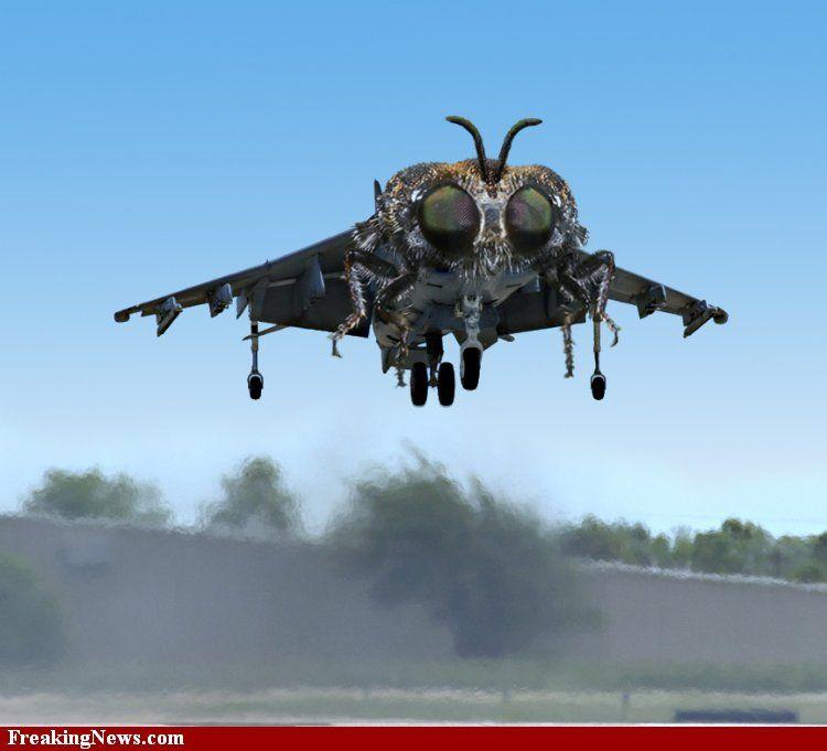 Fly-Aircraft--22936.jpg