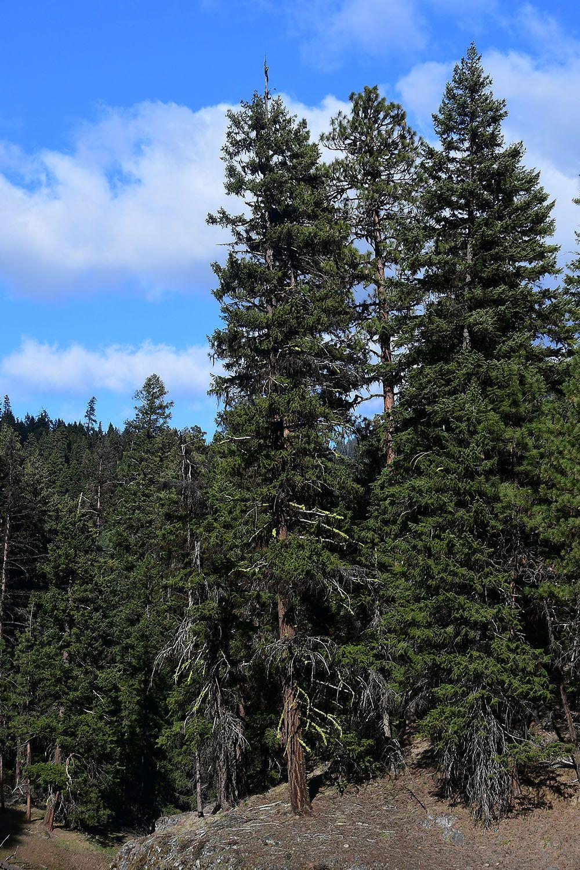 Forest#123.jpg