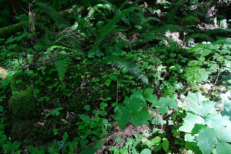 Forest#33.jpg