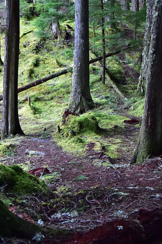 Forest#392.jpg