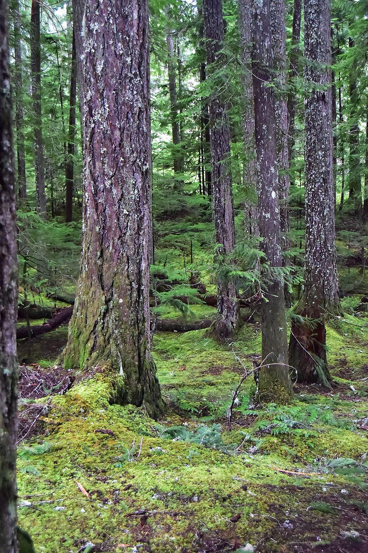 Forest#411.jpg