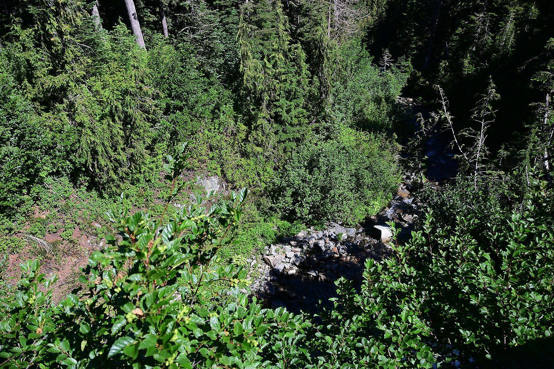 Forest#416.jpg
