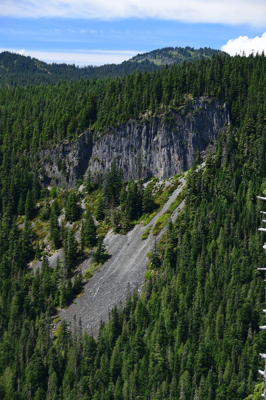 Forest#527.jpg