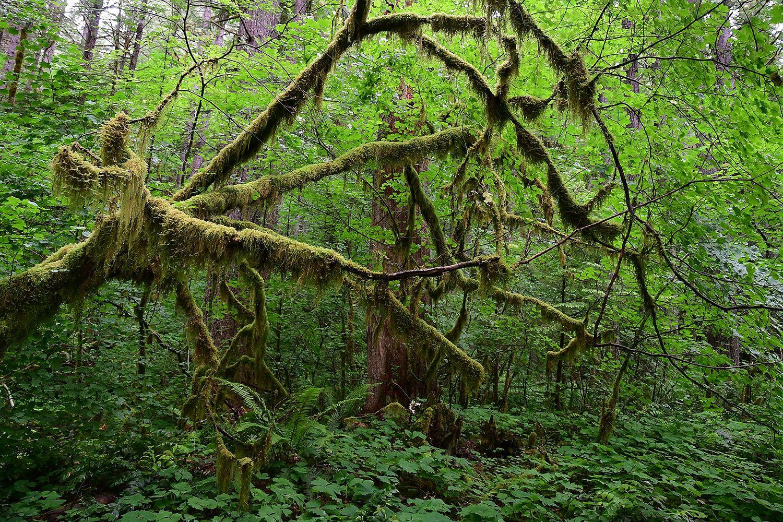 Forest#573.jpg