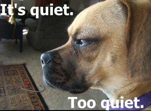 funny-dog-pictures-quiet-too-quiet.jpg