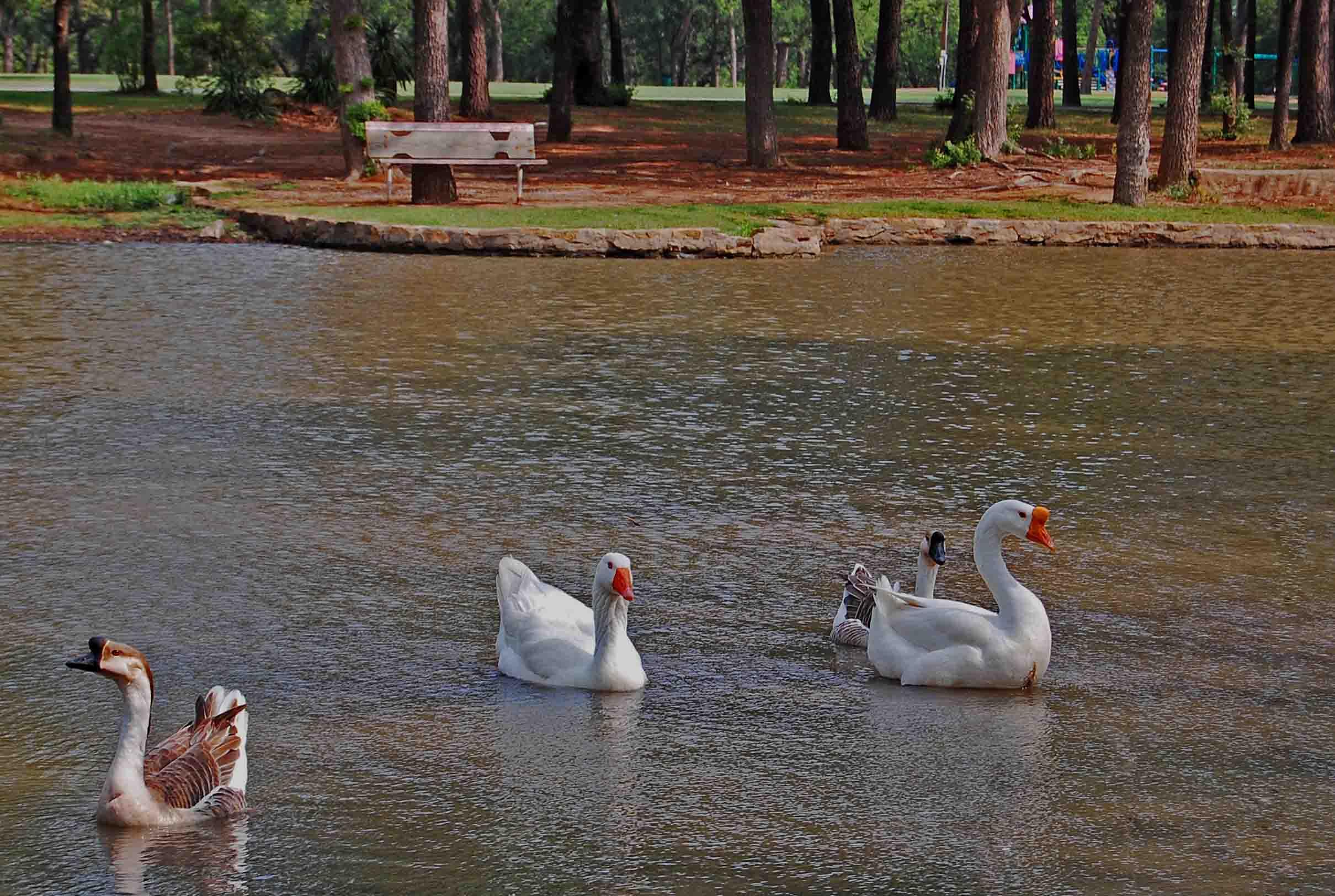 Goose Pond.jpg
