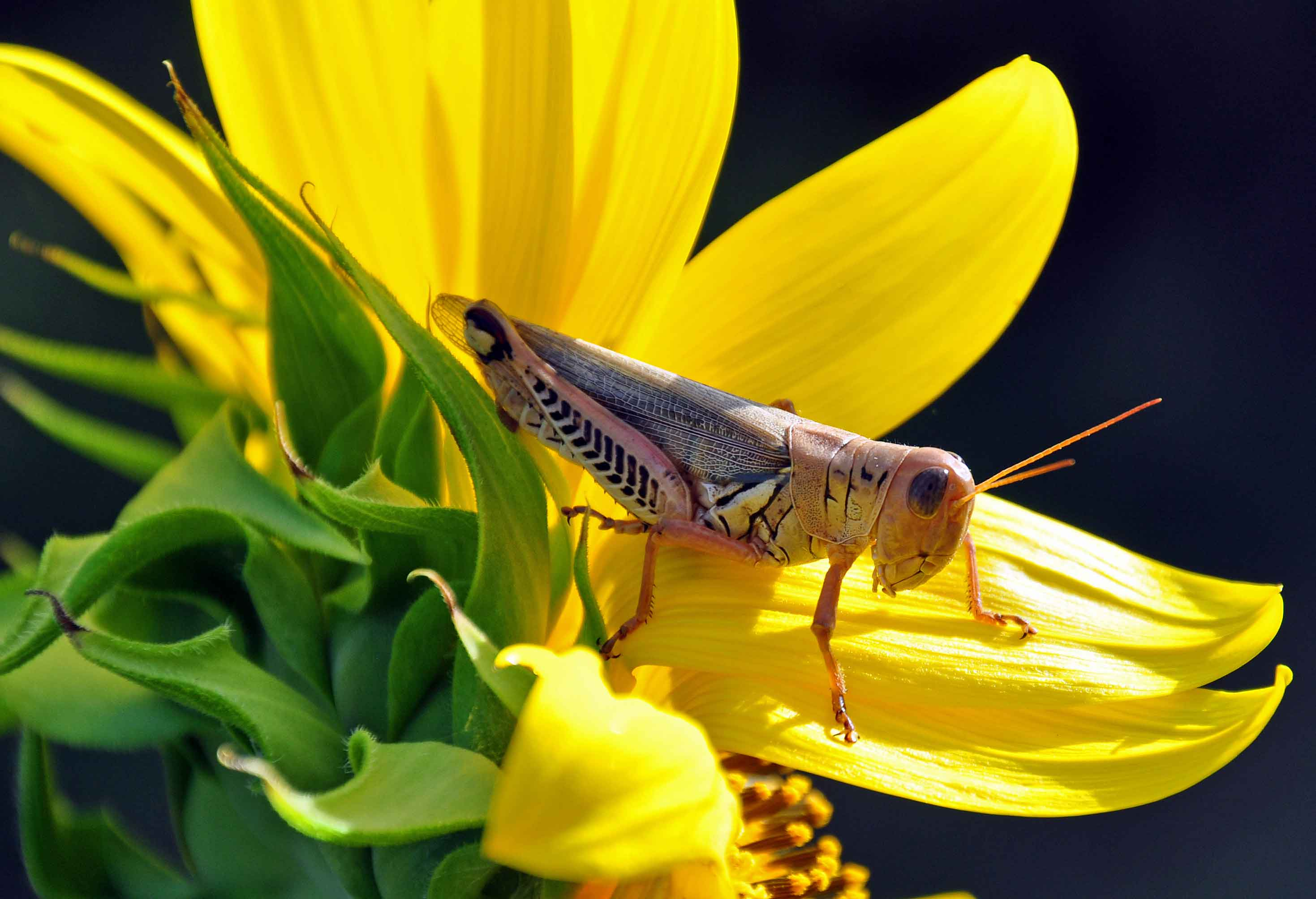 grasshopper_web.jpg