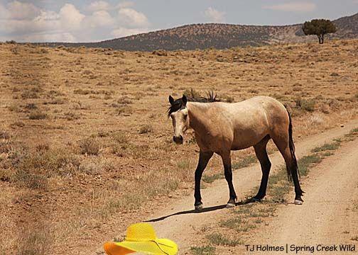 horse on road.jpg