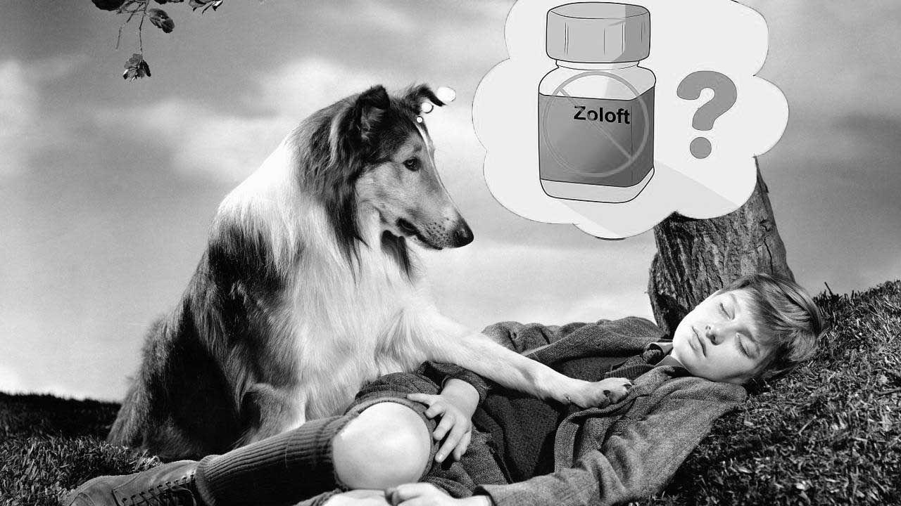 lassie4.jpg
