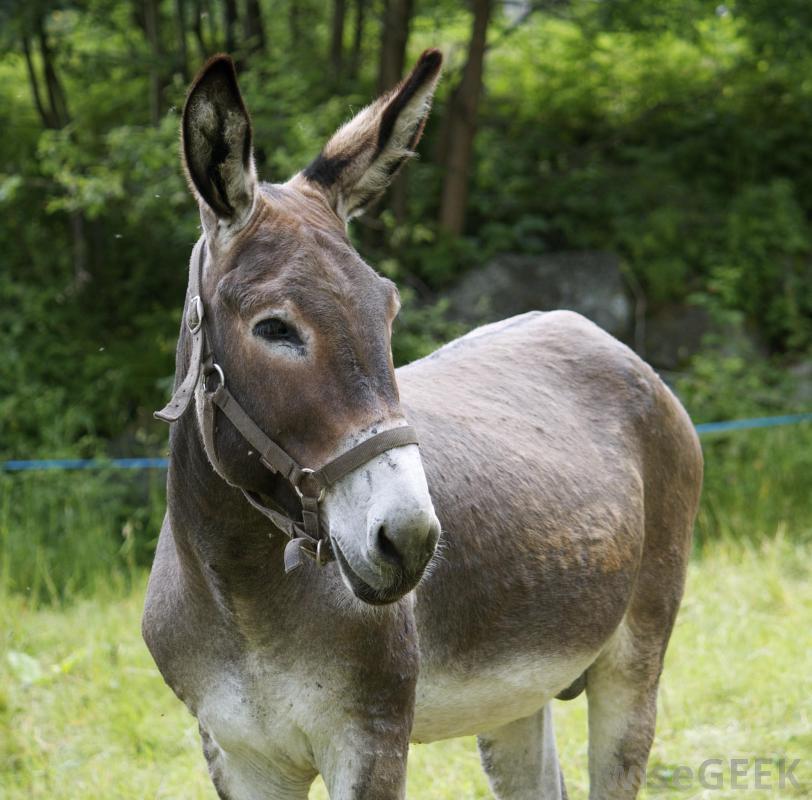 mule-near-grass.jpg