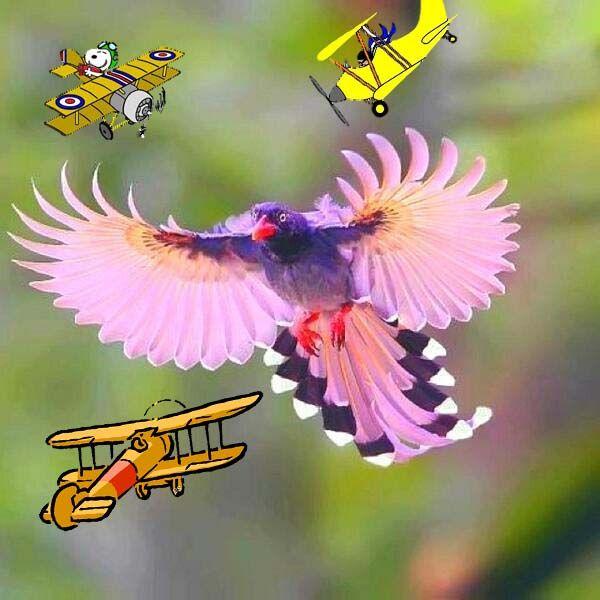 pink bird1.jpg