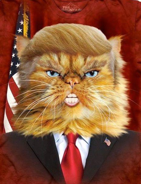 Pres Trump Cat.jpg