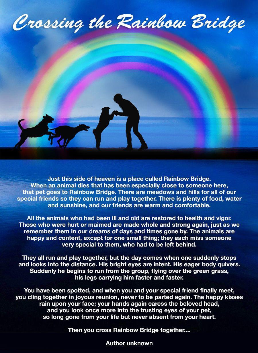 rainbowBridgeForDogs.jpg