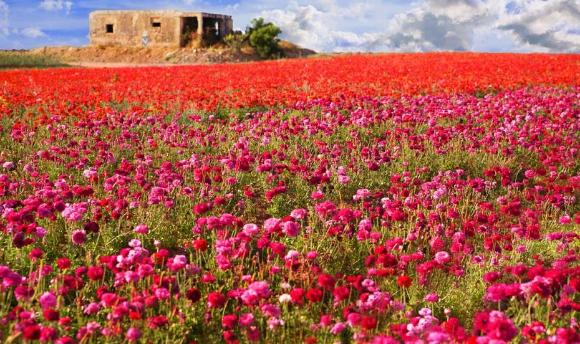 Screenshot_2020-11-22 Flowers Foreshadow the Messiah's Return .png
