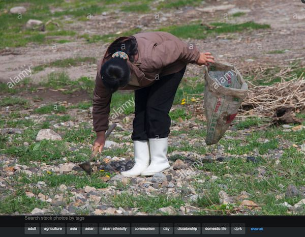 Screenshot_2020-11-26 Stock Photo - North Korean woman collecting grass to eat in a field, Nor...jpg