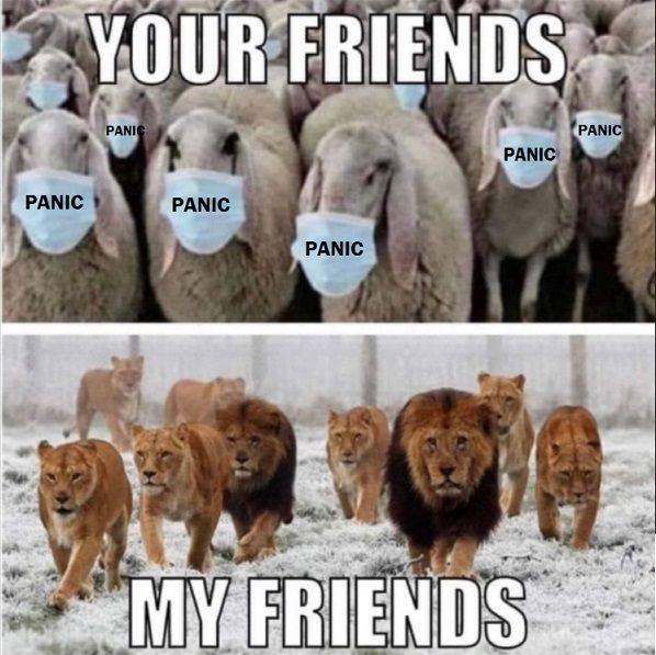 SHEEP PANIC.jpg