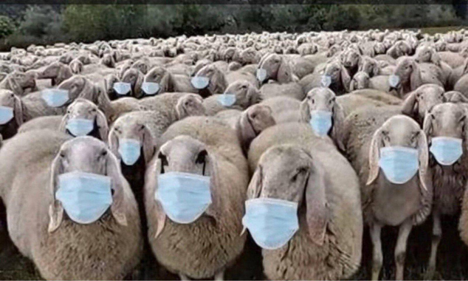 SheepWithMasks.jpg