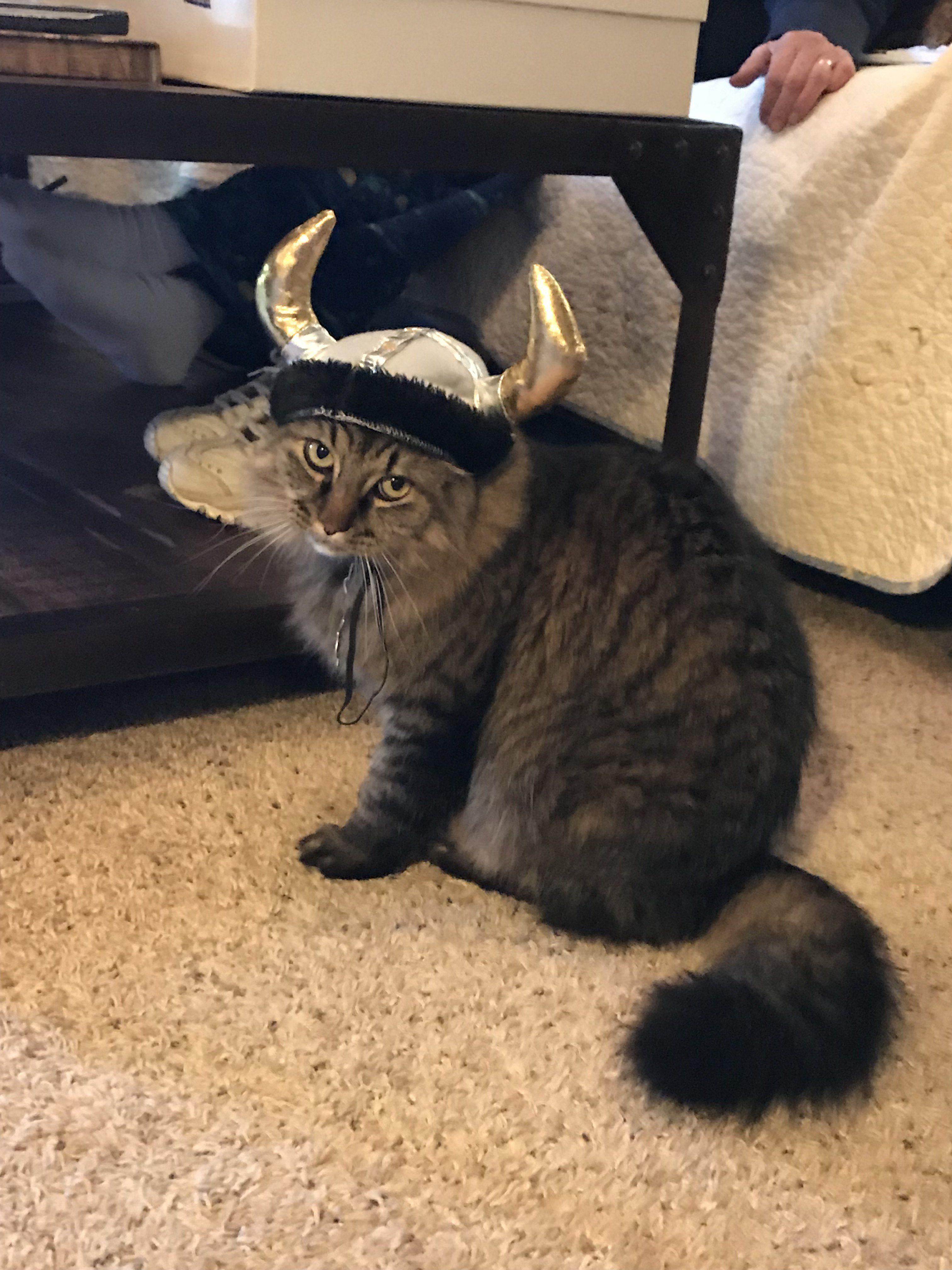 the viking.jpeg