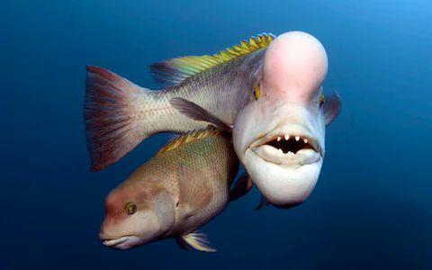 transgender fish.jpg