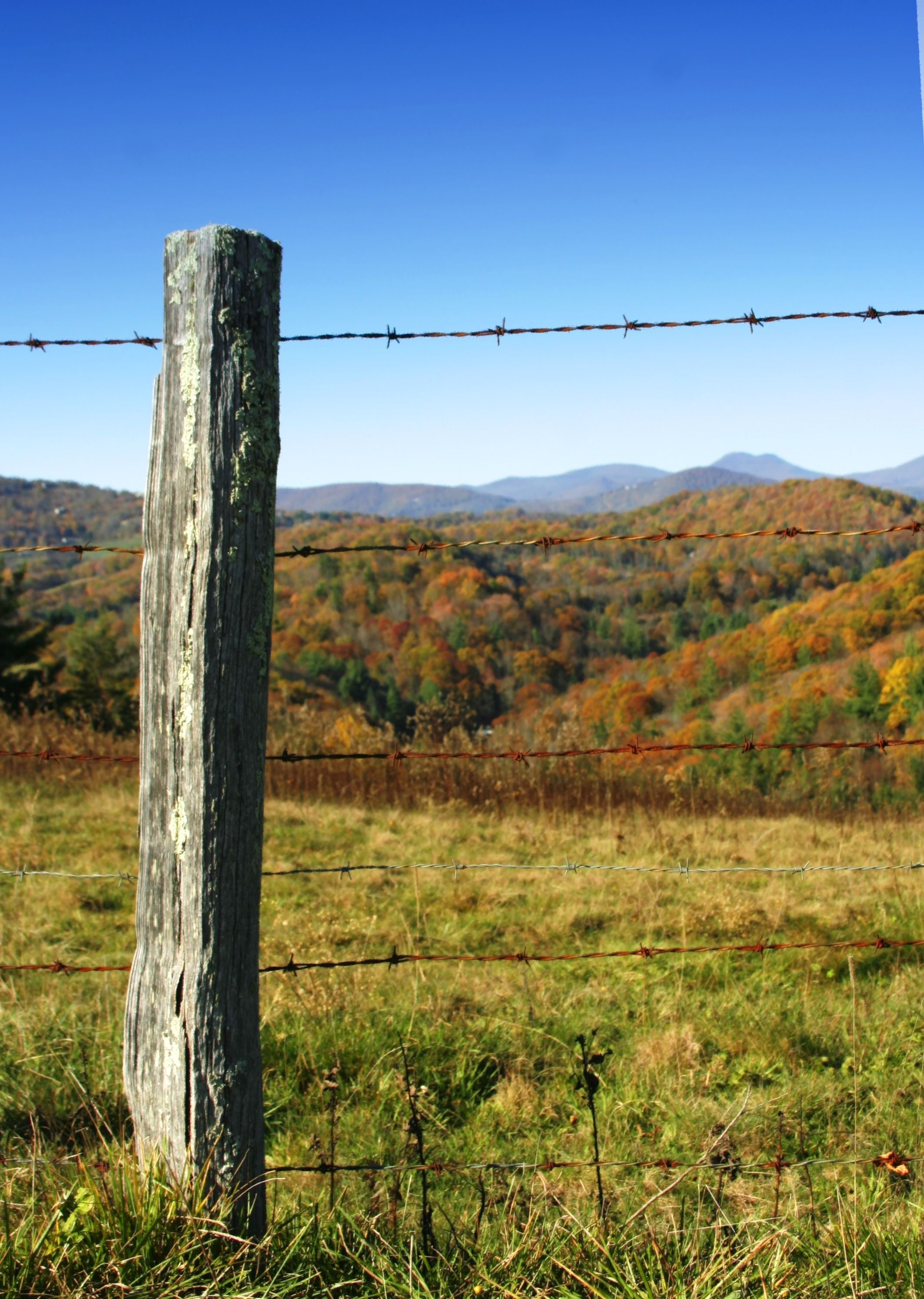 Wooden-fence-post.jpg