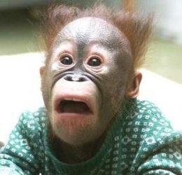 $monkey_shocked2.jpg