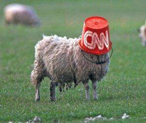 sheepcnn.jpg