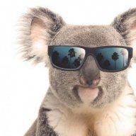 KoalaCorp